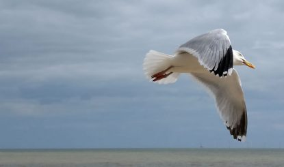 Clacton, UK. This Fella Was Ahead Of The Pack When A Flock Of Seagulls Took To The Air